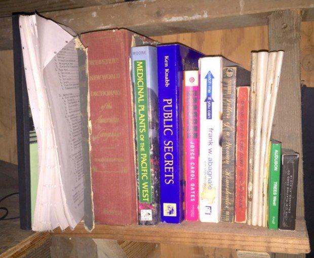 Mad River Cabin - Bookshelf